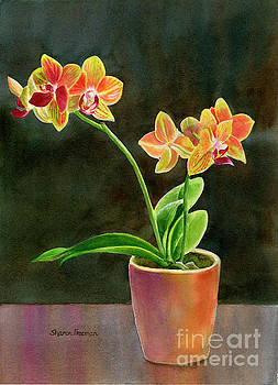 Yellow Orchid in a Pot with dark background by Sharon Freeman