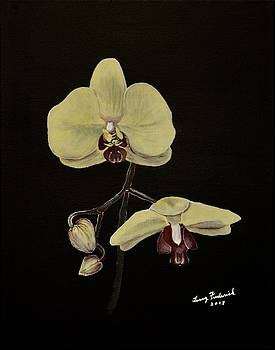 Yellow Orchid by Terry Frederick