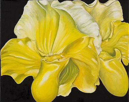 Yellow Orchids by Sweta Prasad
