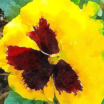 Yellow Pansy by Kenna Westerman
