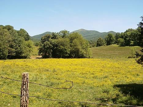 Yellow Pasture by Glenda Barrett