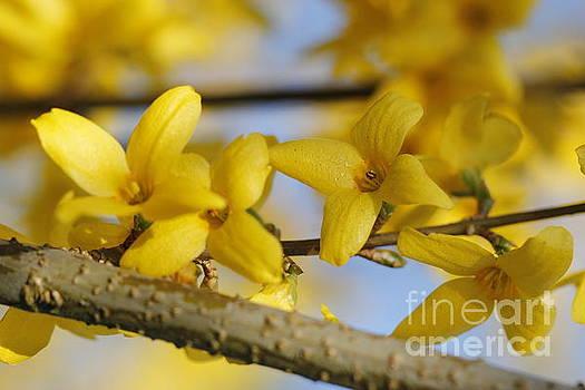 Yellow plant in springtime by Geraldine Jane Ramos-Bittenbinder