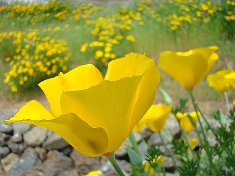Baslee Troutman - Yellow Poppy Flower Meadow Landscape art prints Baslee Troutman