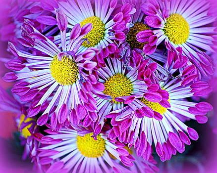 Yellow Purple and White by AJ  Schibig