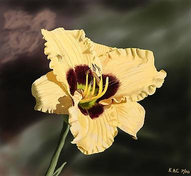 Yellow-Purple Lily  by Kenny Chaffin