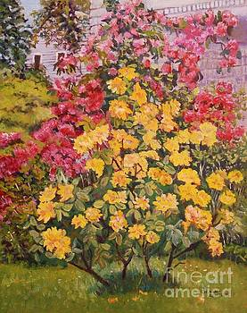 Yellow Rhododendron  by Jeannie Allerton