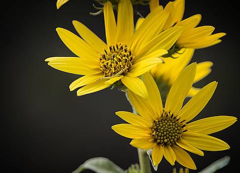 Ricky Barnard - Yellow