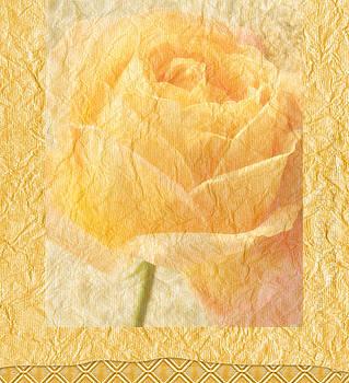 Yellow Rose by Catherine Alfidi