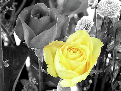 Yellow Rose by Graham Taylor