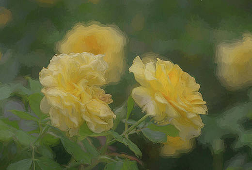 Yellow Rose by Jeff Oates Photography