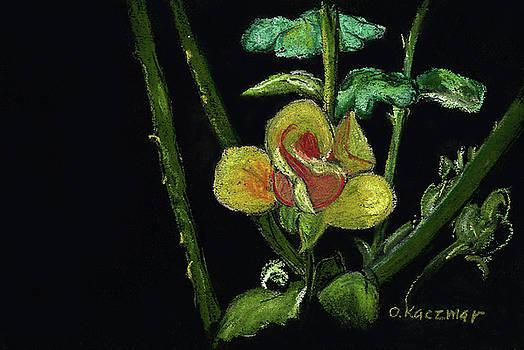 Yellow Rose by Olga Kaczmar