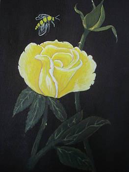 Yellow Rose  by Tonya Hoffe