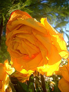 Yellow Roses 3 by Maria Mills