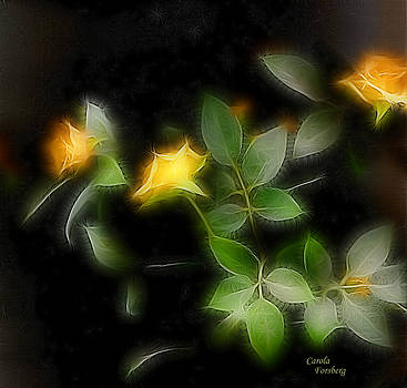 Yellow Roses by Carola Ann-Margret Forsberg