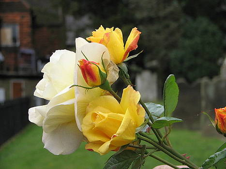 Yellow Roses of East Grinstead by Libby  Cagle