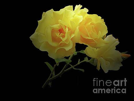 Yellow Roses on Black by Victoria Harrington