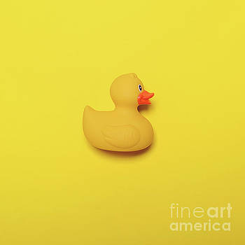Yellow rubber duck on yellow background - Minimal design by Aleksandar Mijatovic