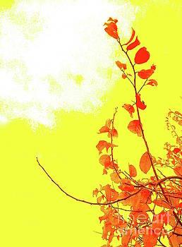 Yellow sky fall leaves by Wonju Hulse