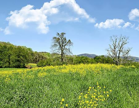 Yellow Spring by Susan Leggett