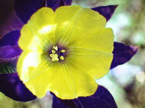 Yellow Star by Ramona Barnhill