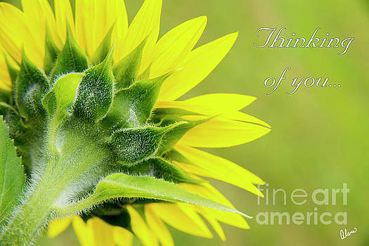 Yellow Sunflower, Thinking of you by Alana Ranney