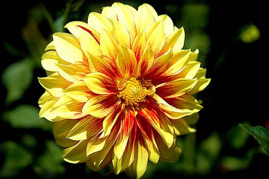 Milena Ilieva - Yellow Sunshine