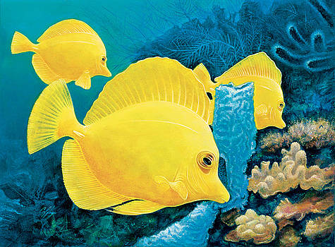 Yellow Tangs by Durwood Coffey
