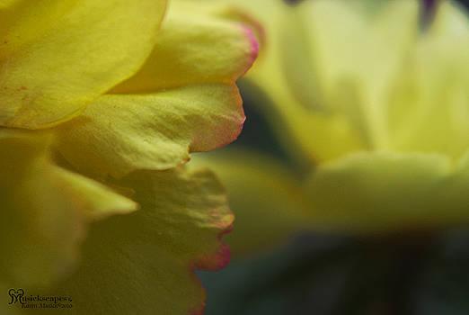 Karen Musick - Yellow Tiny Moss Roses