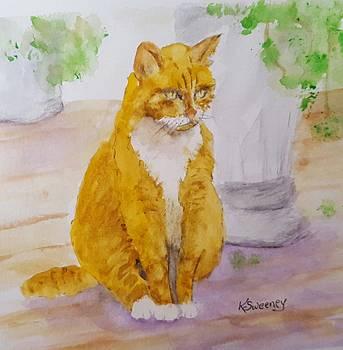 Yellow Tom Cat by Kathy Sweeney