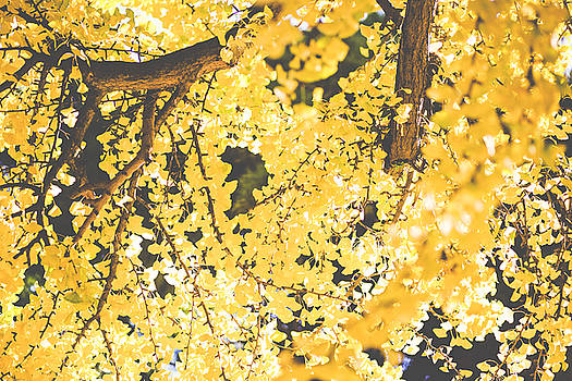 Yellow Tree by Andre Goncalves