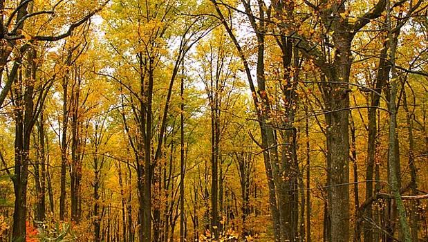 Yellow Trees by Alexa Gurney
