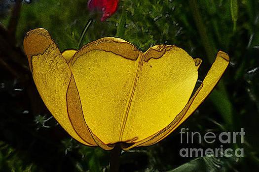 Yellow Tulip 2 by Jean Bernard Roussilhe