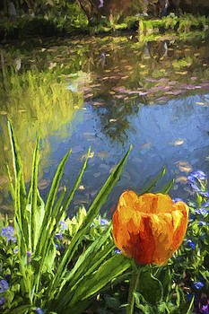 Yellow Tulip in Giverny  by David Smith