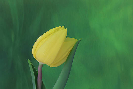 Yellow Tulip Leaning on Leaf by Kay Kochenderfer