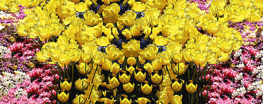 Yellow Tulips by Nabila Khanam