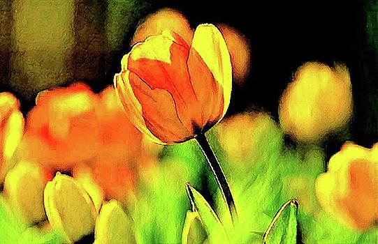 Yellow Tulips by Oscar George