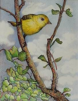 Yellow Warbler by Catherine Robertson