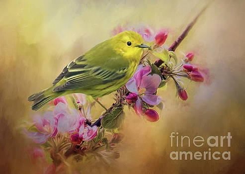 Yellow Warbler in the flowers by Myrna Bradshaw
