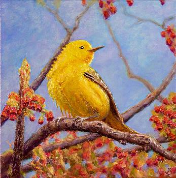 Yellow Warbler by Joe Bergholm