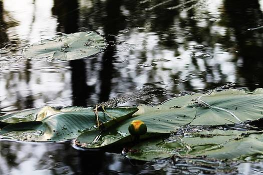 Yellow Water Lily  by Bethany Benike