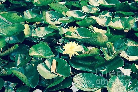 Yellow Waterlily by Danielle Groenen