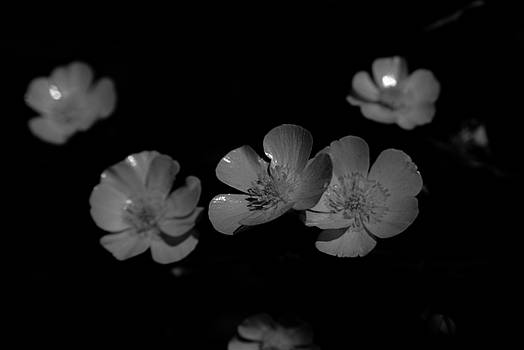 Michelle  BarlondSmith - Yellow Wildflower in Black and White