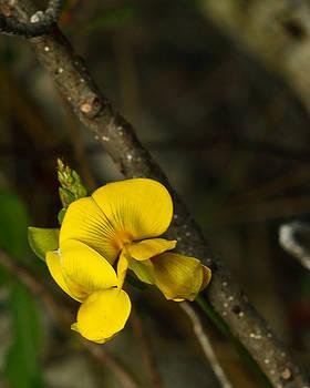Yellow wildlife Flower by Jorge Mejias