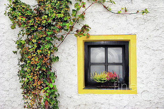 Yellow Window by Daliana Pacuraru