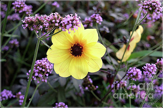 Yellow with Purple Flowers by Carolyn Abell Hodges