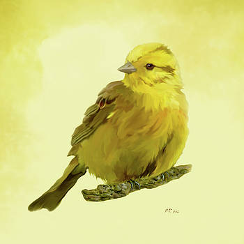 Yellowhammer by Bamalam  Photography