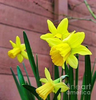Yellow_Lilies_2 by Tin Tran