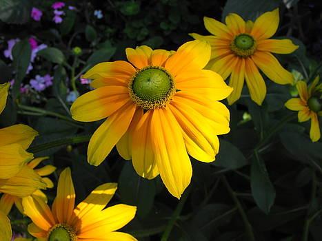 Yellows by Marianne Mason
