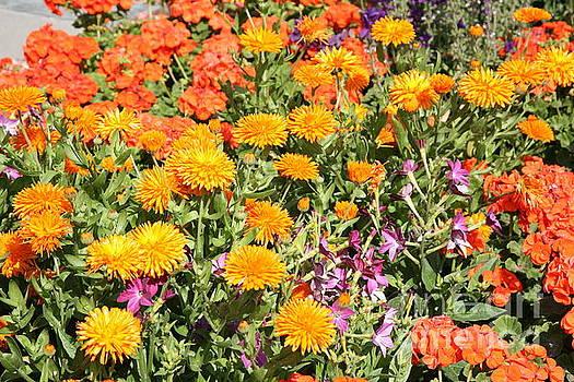 Chuck Kuhn - Yellows Oranges Flowers