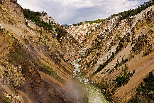 Yellowstone Lower Falls by David Simpson